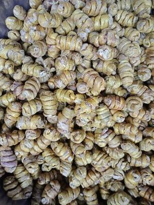 这是一张关于野生黄草石斛的产品图片