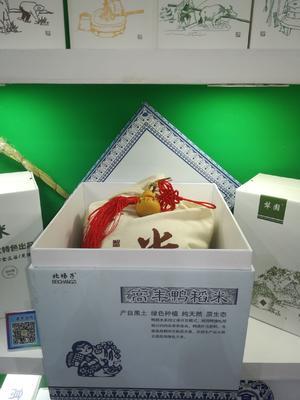 黑龙江省双鸭山市集贤县东北大米 一等品 一季稻 粳米