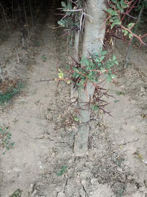 山西省运城市夏县皂角树