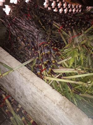 这是一张关于红甘蔗 3 - 4cm 2 - 2.5m的产品图片