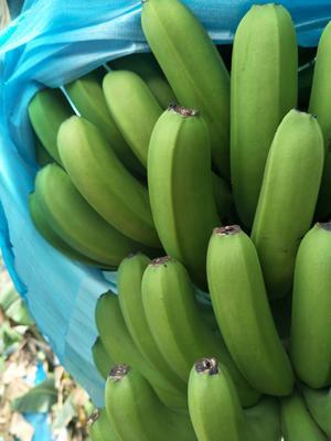 这是一张关于河口香蕉 八成熟的产品图片