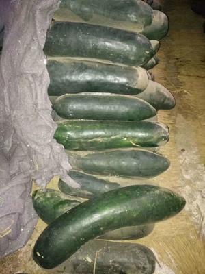 这是一张关于黑皮冬瓜 10~20斤 地冬瓜的产品图片
