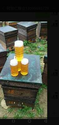 这是一张关于意蜂蜂蜜 塑料瓶装 98% 2年的产品图片
