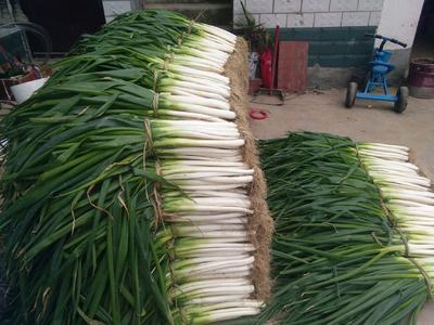 这是一张关于分葱 混装通货 净葱的产品图片