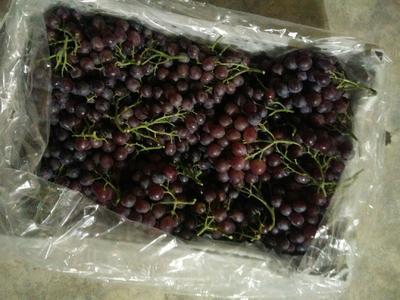 这是一张关于玫瑰香葡萄 0.6-0.8斤 5%以下 1次果的产品图片
