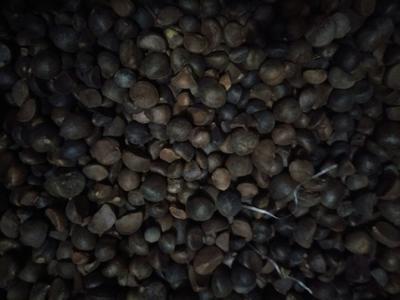 湖南省衡阳市衡东县油茶籽  中小籽出油率高