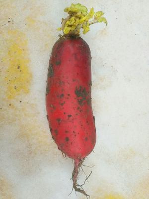 这是一张关于大红萝卜 混装通货的产品图片