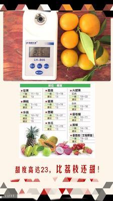 这是一张关于脆皮金桔 2-3cm 1两以下的产品图片