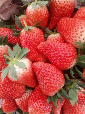 这是一张关于甜宝草莓 20克以下的产品图片