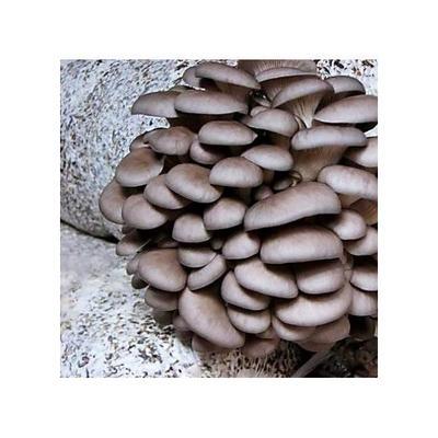 山东省临沂市莒南县蘑菇