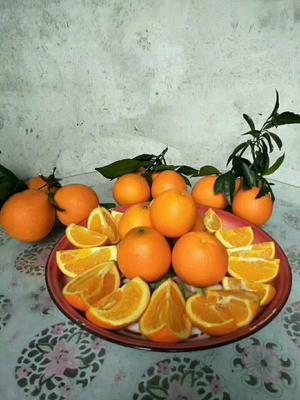 湖南省湘西土家族苗族自治州保靖县纽荷尔脐橙 60 - 65mm 4-8两