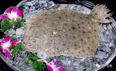 这是一张关于鸦片鱼的产品图片