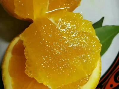 这是一张关于纽荷尔脐橙 95 - 100mm 4-8两的产品图片