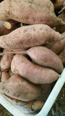 这是一张关于红香蕉红薯 混装通货 红皮的产品图片