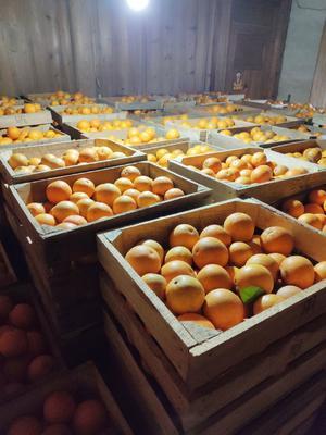 这是一张关于塔罗科血橙 60 - 65mm 4两以下的产品图片