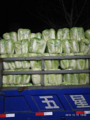 这是一张关于北京三号大白菜 6~10斤 净菜的产品图片