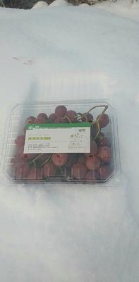 这是一张关于红提 1.5- 2斤 5%以下 1次果的产品图片