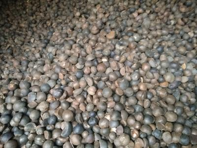广西壮族自治区河池市巴马瑶族自治县野山茶籽