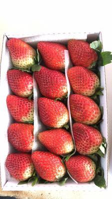 云南省红河哈尼族彝族自治州红河县美国黑莓