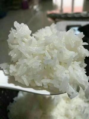 这是一张关于五常大米 一等品 一季稻 粳米的产品图片