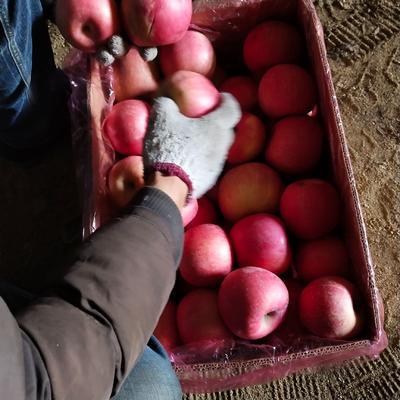 这是一张关于红富士苹果 75mm以上 片红 纸袋的产品图片