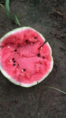 这是一张关于8424西瓜 6斤打底 8成熟 1茬 有籽的产品图片