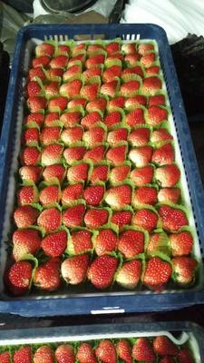 这是一张关于红颜草莓苗 15公分 地栽苗的产品图片