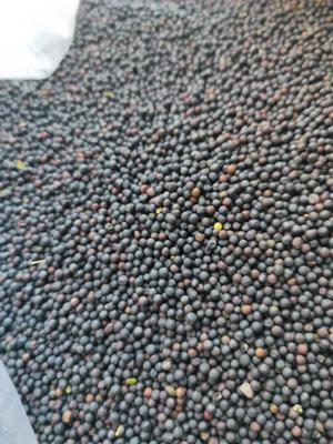 内蒙古自治区呼伦贝尔市鄂伦春自治旗油菜籽