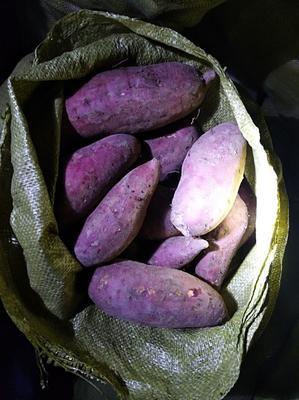 这是一张关于西瓜红 混装通货 红皮的产品图片