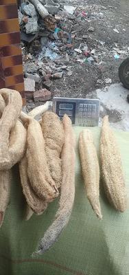 山东省枣庄市峄城区丝瓜络 混装通货