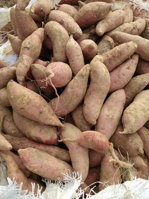 这是一张关于烟薯25 混装通货 红皮的产品图片
