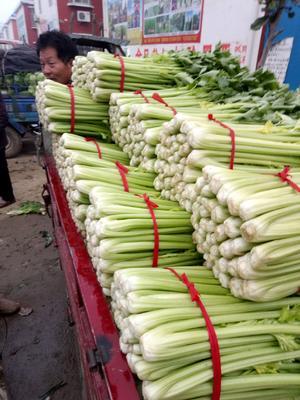 这是一张关于西芹 50~55cm 0.5斤以下 露天种植的产品图片