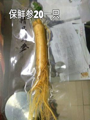 这是一张关于园参 鲜参 散装 整根的产品图片