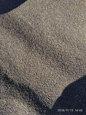 青海省海北藏族自治州门源回族自治县油菜籽