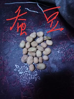 甘肃省定西市渭源县生干蚕豆
