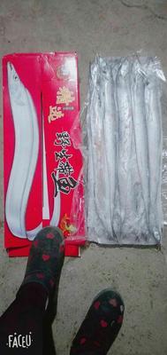 河北省承德市滦平县舟山带鱼 野生 0.5公斤以下
