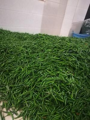 这是一张关于朝天椒 5cm以下 特辣 红色的产品图片