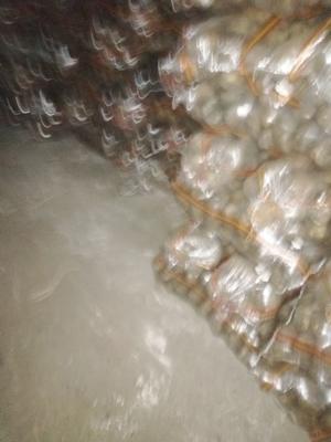 这是一张关于大白花土豆 3两以上的产品图片