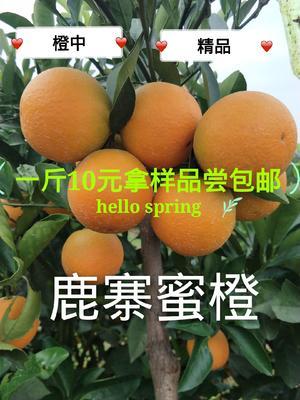 这是一张关于鹿寨蜜橙 65 - 70mm 4两以下的产品图片
