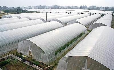 北京东城区聚乙烯地膜  沙糖桔防寒专用膜