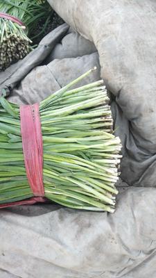 这是一张关于大叶韭菜 头茬 40~45cm的产品图片