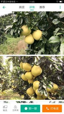 福建省宁德市霞浦县红心柚 1.5斤以上