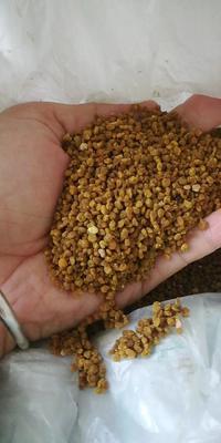 新疆维吾尔自治区新疆维吾尔自治区北屯市枣花粉 6-12个月