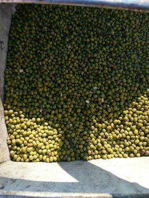 吉林省白城市洮南市东北绿豆 散装 2等品