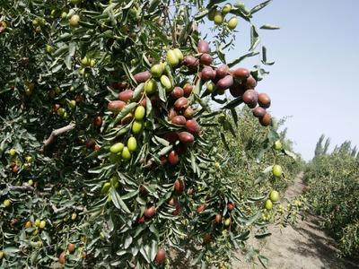 新疆维吾尔自治区阿拉尔市阿拉尔市灰枣 统货