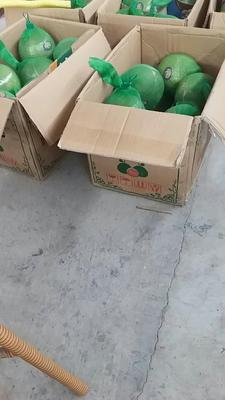 广西壮族自治区崇左市凭祥市越南红心青柚 1.5斤以上
