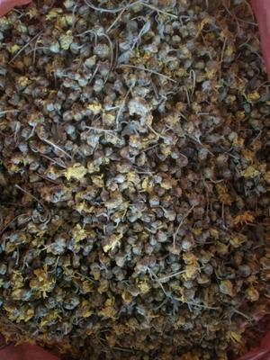 这是一张关于干野菊花的产品图片