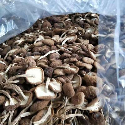 贵州省铜仁市玉屏侗族自治县干茶树菇 袋装 1年