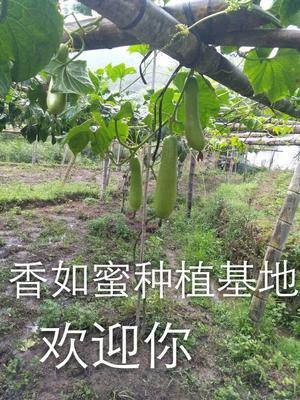 江西省赣州市会昌县香如蜜