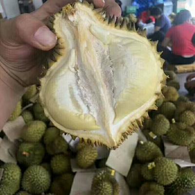 这是一张关于巴掌榴莲 2公斤以下 60 - 70%以上的产品图片